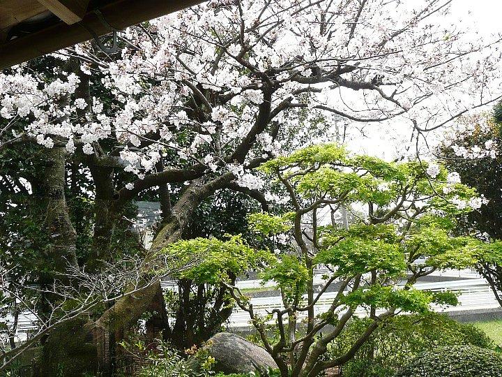 福岡のS氏住宅_c0112559_1727240.jpg