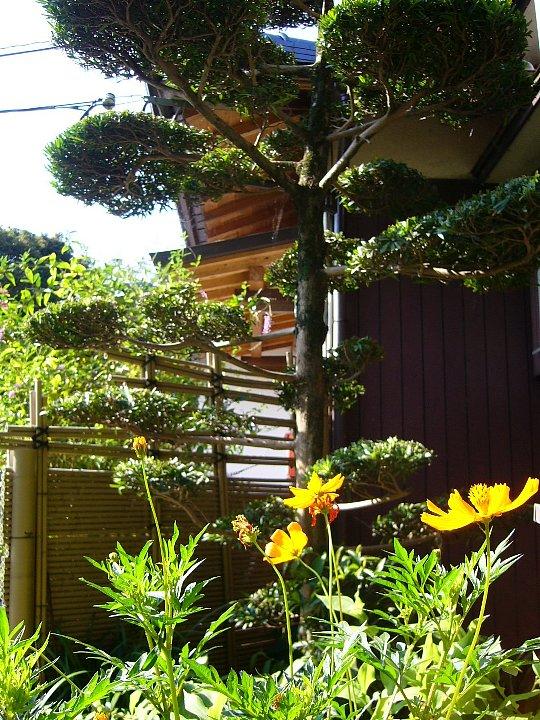 福岡のS氏住宅_c0112559_17273592.jpg