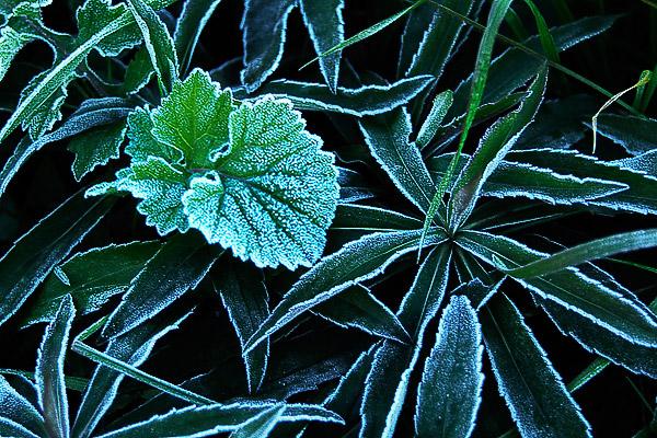 冬「寒度」_e0117517_1733551.jpg