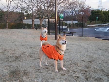年末年始 丹後への犬連れ車中泊の旅 琵琶湖編_b0080342_10382554.jpg
