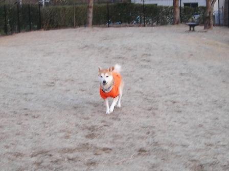 年末年始 丹後への犬連れ車中泊の旅 琵琶湖編_b0080342_10384622.jpg
