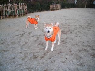 年末年始 丹後への犬連れ車中泊の旅 琵琶湖編_b0080342_1039570.jpg