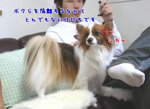 d0013149_2337403.jpg