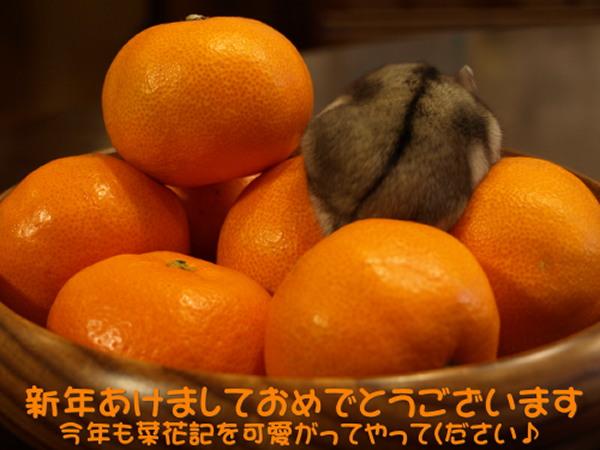 b0111004_1618295.jpg