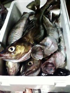 初釣り_d0026905_17142582.jpg