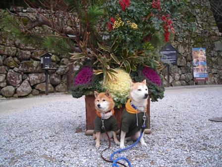 年末年始 丹後への犬連れ車中泊の旅 彦根城編_b0080342_84072.jpg