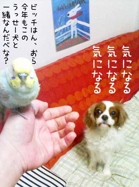 b0053867_045214.jpg
