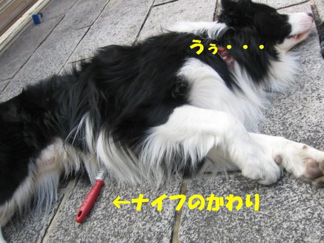 e0117976_12332361.jpg