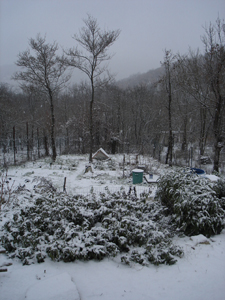 雪が降りました_f0106597_4214815.jpg