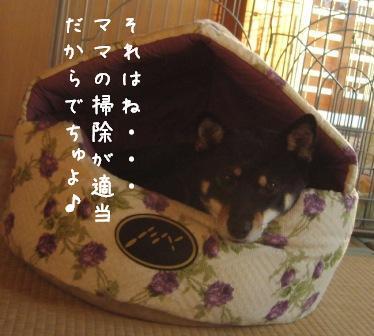 f0068501_2255517.jpg