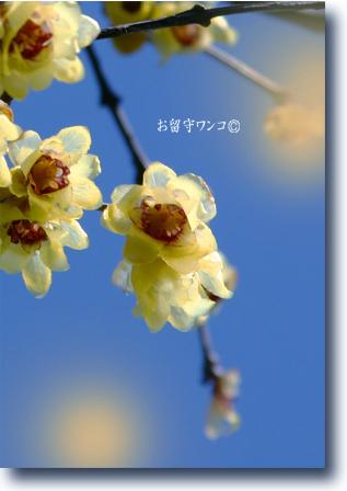 f0111147_23401668.jpg