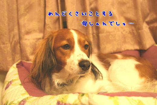 d0013149_0411118.jpg