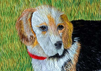 ビー&北海道犬_a0070350_113625.jpg