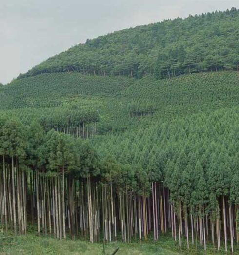 so-re高松のCO2削減量は杉の木112本¦_e0064493_16104172.jpg