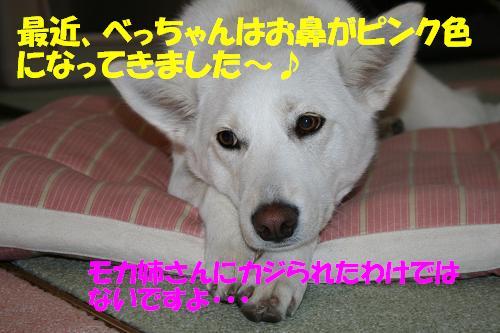 f0121712_2157122.jpg