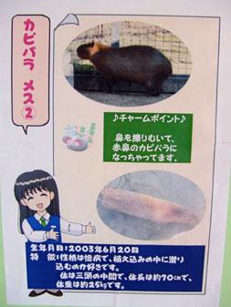 とくしま動物園のカピバラたち(後編)_f0138828_9434244.jpg