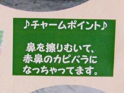 とくしま動物園のカピバラたち(後編)_f0138828_9435262.jpg