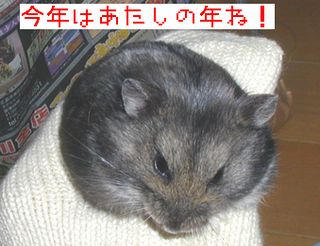 b0016983_1613084.jpg