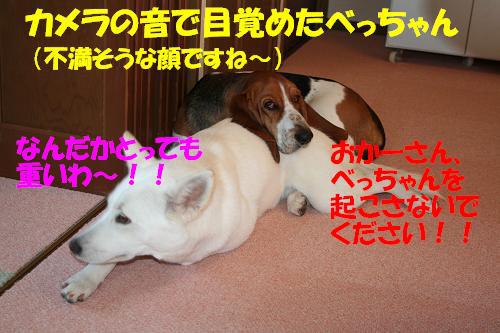 f0121712_165982.jpg