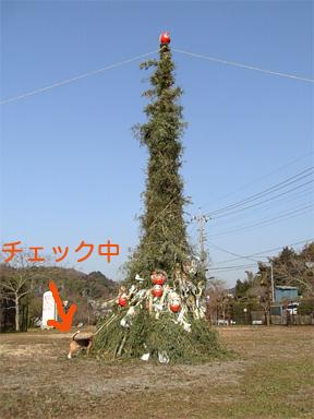 b0104420_177383.jpg