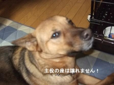 b0087400_0365896.jpg