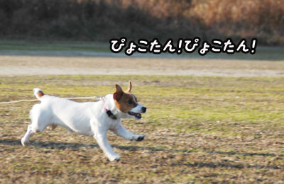 f0129214_111434.jpg