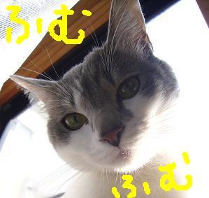 ガン探知犬_f0002743_21242639.jpg