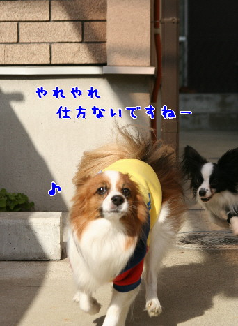 d0013149_22472016.jpg