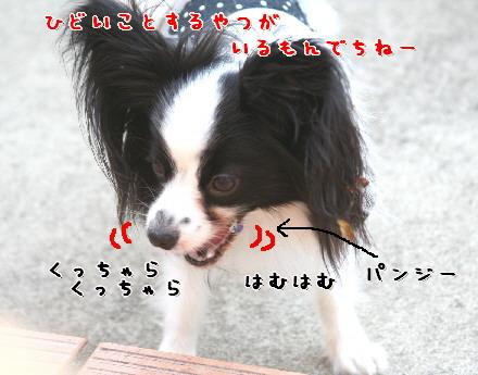 d0013149_2314344.jpg
