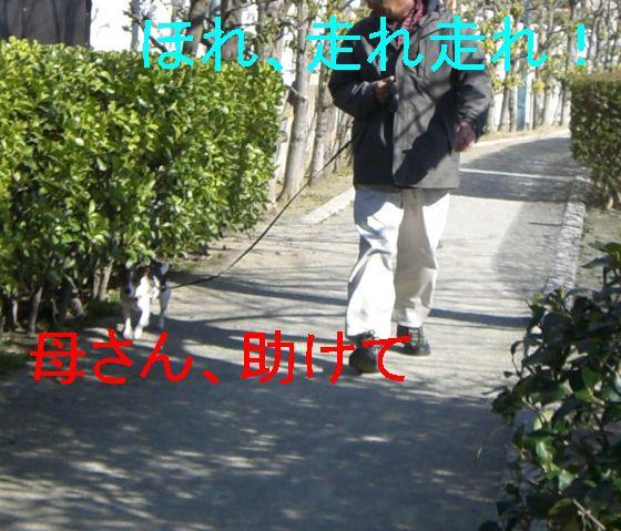 f0053952_22111255.jpg
