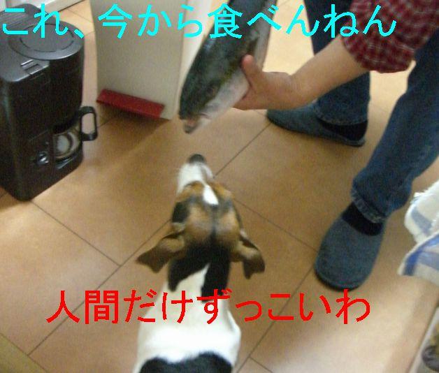 f0053952_22152233.jpg