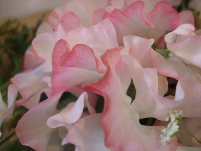 オークリーフ(バラ・ジュリアとスイートピーの花束)_f0049672_16463577.jpg