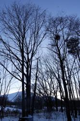 向田邦子とお正月。_d0028589_0353693.jpg