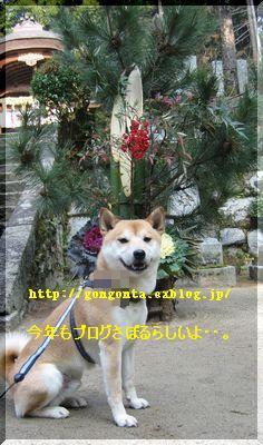 e0085147_1624490.jpg