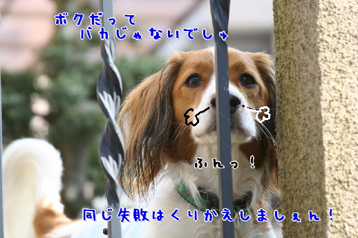 d0013149_23282366.jpg