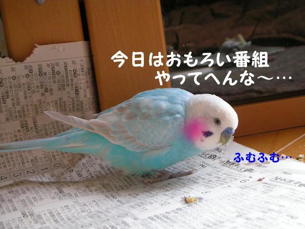 f0132055_0522121.jpg