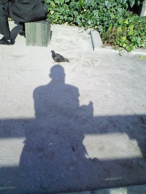 黒い鳩に、乗られた。@昌平橋_c0004568_23101711.jpg