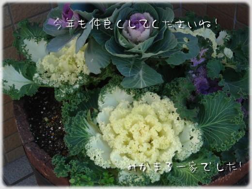 b0078073_1414197.jpg
