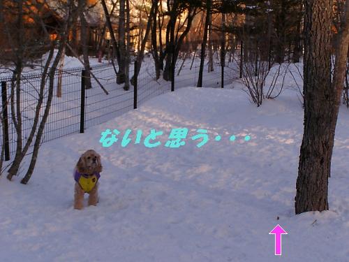 b0067012_20253211.jpg