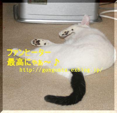 e0085147_4444741.jpg