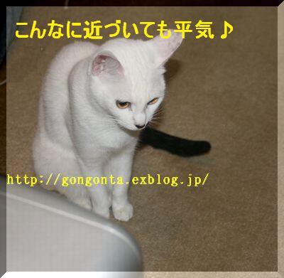 e0085147_444723.jpg