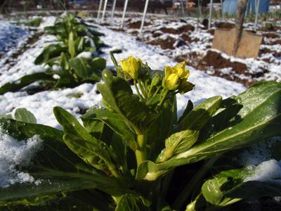 農園便り・凍てつく畑_c0063348_1115143.jpg