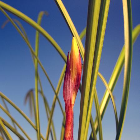 ◆雪蘭の黄花、。                  No.197_d0103457_2392837.jpg