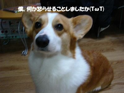 c0153410_22362127.jpg