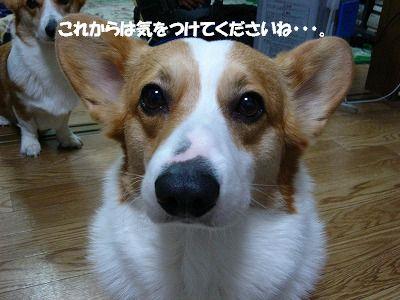 c0153410_22414575.jpg