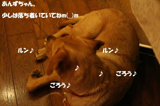 a0108115_0374741.jpg