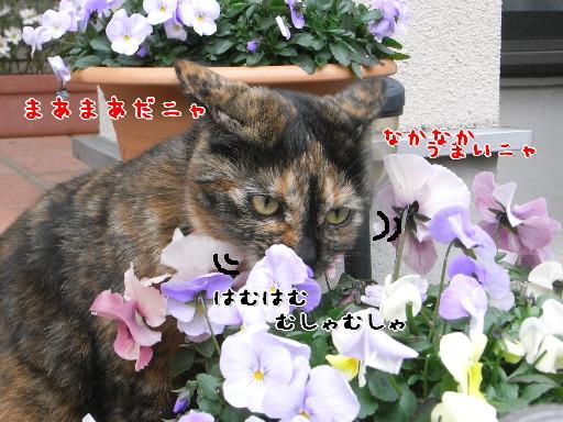 d0013149_152875.jpg