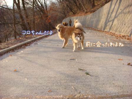 f0064906_16541036.jpg