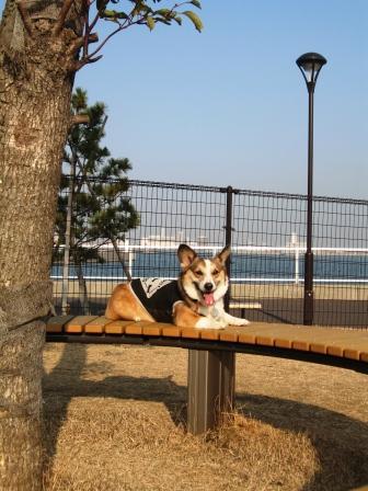 海の近くのドッグラン ~城南島海浜公園_f0155118_23592310.jpg