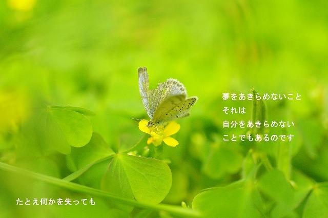 c0112724_11191550.jpg